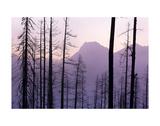 Glacier National Park Forest Posters af Jason Savage