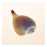 Fig Shell Prints by Tom Artin