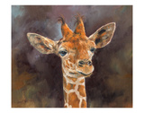 Giraffe Portrait Prints by David Stribbling