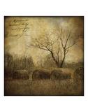 Hayrollers Prints by Dawne Polis