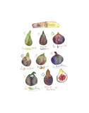 Fig Varieties Art by Lucile Prache