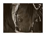 Hackamore Horse Posters by Barry Hart