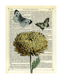 Flower & Butterflies Prints by Marion Mcconaghie