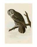 Great Cinereous Owl Kunst af John James Audubon