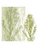 Gossamer Greens Print by Erin Clark