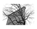 Flatiron with Tree (b/w) Prints by Erin Clark