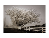 Frosted Tree & Fence Posters by David Lorenz Winston