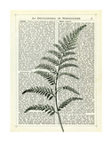 Fern 2 Posters by Marion Mcconaghie