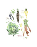 Green Winter Vegetables Prints by Lucile Prache
