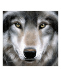 Grey Wolf Portrait Prints by Sarah Stribbling