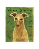 Italian Greyhound (Fawn) Prints by John W. Golden