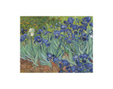 Irises in the Garden Prints by Vincent van Gogh
