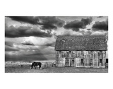 Horse and Barn Posters by Trent Foltz
