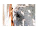 Horse's Eye Poster af Tom Artin