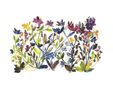 High Country Wildflowers Prints by Kiana Mosley