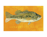 Largemouth Bass Posters by John Golden