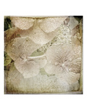 Hydrangeas 4 Prints by Dawne Polis
