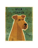 Irish Terrier Posters by John W. Golden