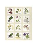 Kent Garden Fragments Prints by Annabel Hewitt