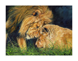 Lion Love Posters by David Stribbling