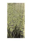Lily Pond III Prints by Erin Clark