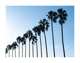 La Jolla Palms Prints by Jenny Kraft