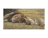 Lion and Lioness Posters by Adam Smith