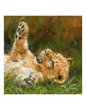 Lion Cub on Grass Print by David Stribbling