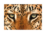 Leopard Eyes Painting Stampa giclée di Sarah Stribbling