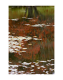 Lily Pads and Red Maple Print by Michael Hudson