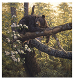 Longing for Apples Giclee Print by Greg Alexander