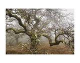Mossy Oak Kunst af David Lorenz Winston
