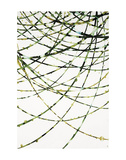 Moss Vine Prints by Candice Alford