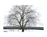 Manhattan Bridge Span with Tree Posters by Erin Clark