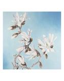 Magnolia Print by Elizabeth Hellman