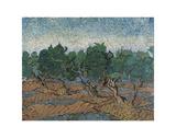 Olive Grove, 1889 Affiches par Vincent van Gogh