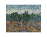 Olive Grove, 1889 Prints by Vincent van Gogh