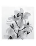 Orchideezerstäuber I Kunstdrucke von Tom Artin