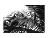 Palms 13 Print by Jamie Kingham