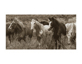 Pasture Pals Prints by Barry Hart