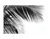 Palms 11 Posters av Jamie Kingham