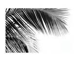 Palms 11 Prints by Jamie Kingham