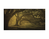 Oak Alley Morning Shadows Prints by William Guion