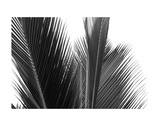 Palms 15 Prints by Jamie Kingham