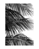 Palms 4 Print by Jamie Kingham