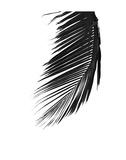 Palms 8 Print by Jamie Kingham