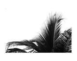 Palms 2 Posters by Jamie Kingham