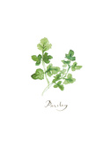 Parsley Posters by Lucile Prache