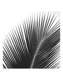 Palms 14 (detail) Kunstdruck von Jamie Kingham