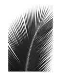 Palms 14 Kunst von Jamie Kingham